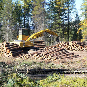 silver city timber logging